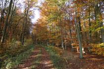 Unser schöner Stadtwald