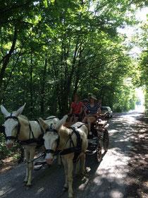 Kutschfahrt mit Eseln