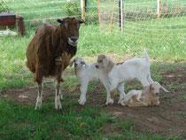 Kunigunde im Mutterglück
