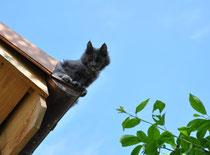 Sanfte Riesen Derrilin heute Morgen auf dem Dach