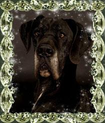 Happy Birthday Buddy 27.12.2012