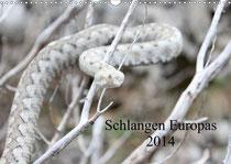 """Titelbild Kalender """"Schlangen Euroaps 2014"""""""