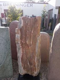 Versteinertes Holz
