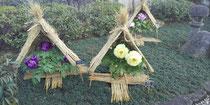 上野公園牡丹園