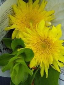 あなたにとっての幸せ色の花は何色ですか?
