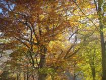 白山麓の豊かな森
