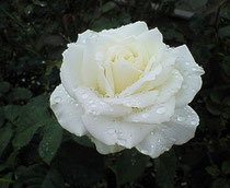2009.10.17