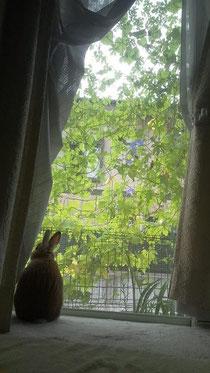 窓の外にはゴーヤで緑のカーテン 秋の気配が…