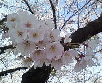 2010.4.3 笠松