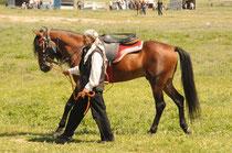 Die Pferde werden präsentiert.