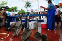 Am Fischmarkt gibt es für jeden etwas.