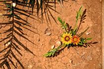Wüstenblume 1, René Kriesch