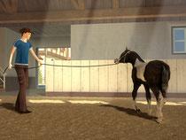 Mein Gestüt - Ein Leben für die Pferde: Screenshot Longieren