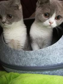 Jamika und Jimena im Neuem Zuhause
