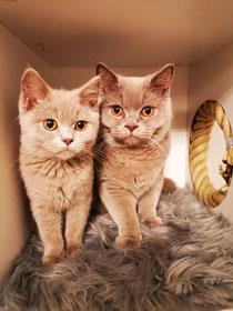 GILBY und Jamiro im Neuem Zuhause
