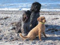 Jane, Cooper & Kiki (die wer weiß was erspäht hat)