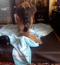 Hundebett in Wunschfarben für einen sehr großen und schweren Hund zur optimalen Unterstützung seiner Gelenke