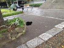 西新井大師にいた猫ちゃん
