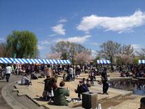 舎人公園、春の花火と千本桜祭り