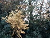 黄色く色づいた葉