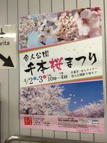 舎人公園千本桜祭りのポスター