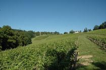 Salies-de-Béarn, domaine Lapeyre-Guilhemas