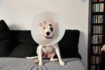 """Tamy, von Geburt an ein """"Problemhund""""?"""