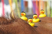 Elisa mit ihren 4 neuen Reitern