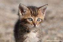 Katzen abzugeben