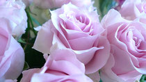 rose/リメンブランス