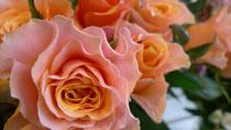 rose/カルピディーム