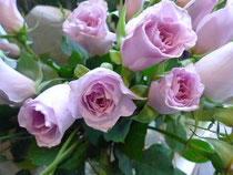 rose/ ニューウエーブ