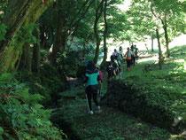 林業試験場 樹木公園 ノルディックウォーキング