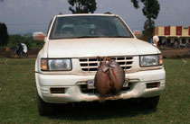 аренда машины с водителем в Найроби