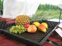 Früchtekorb/Tablett