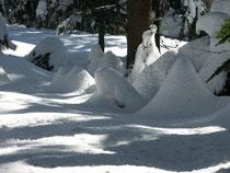 Winter im Lohberger Wald
