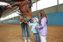 Экскурсия на конюшню