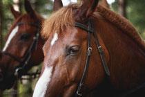 Катание на лошадях; Конные прогулки; Романтические конные прогулки