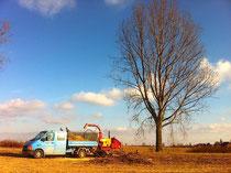 DIE GRÜNDLICHEN. Springe, wir kümmern um uns um die Altbaumpflege
