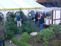 Die Tannenbäume der Familie Popp aus Iselersheim fanden viele Käufer