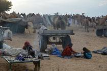 Pushkar Mela-Vollmondfest und Kamelmarkt
