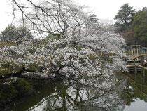 24日 野田 清水公園