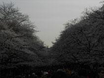 22日 上野公園