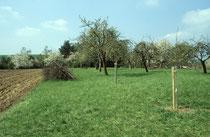 Vereinsgrundstück mit Nachpflanzung