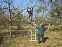 Intensivpflege für einen Apfelbaum
