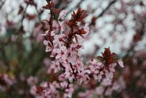 Blütenrundgang