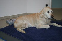 Tierphysiotherapie Magnetfeldtherapie