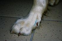 Tierphysiotherapie Akupunktur