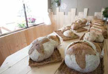 石巻 天然酵母 パン