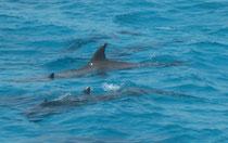 maison des dauphins